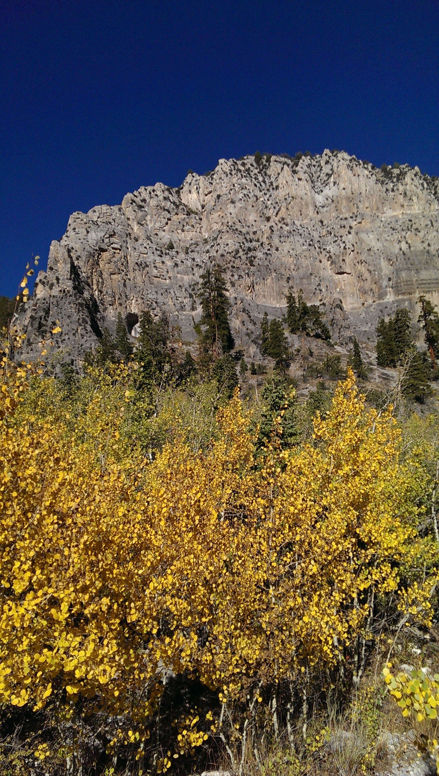 Mt. Charleston In The Fall